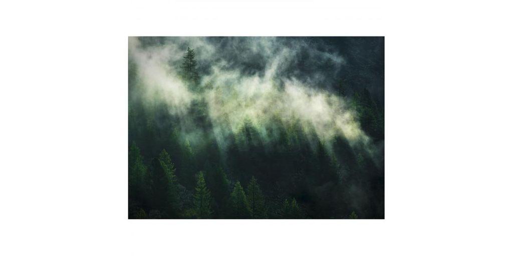 Ködös fenyőerdőt ábrázoló tapéta, 350x250 cm, fenyőzöld - NATURE SAUVAGE